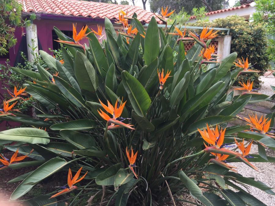 Jarin fleuri de la résidence Le Village - Le Clos des Galéjades